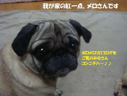DSC02772_20120301201518.jpg