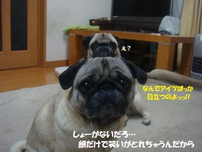 DSC02782.jpg