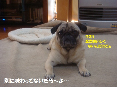 DSC02829_20120323175841.jpg