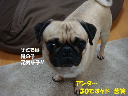 DSC03169_20111028051615.jpg