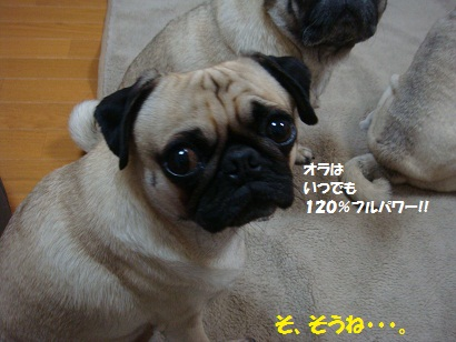 DSC03172_20111028052129.jpg
