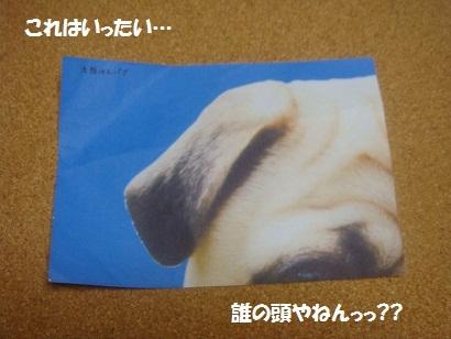 DSC03518_20120314203719.jpg