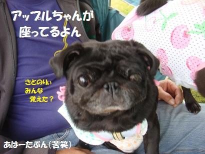 DSC03606_20120405050052.jpg
