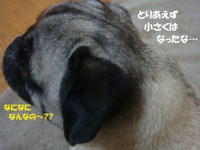 DSC03610_20120323175244.jpg