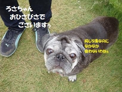 DSC03626_20120409155458.jpg