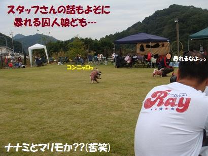 DSC03649_20120407043430.jpg