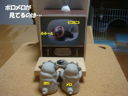 DSC03810_20120318224138.jpg