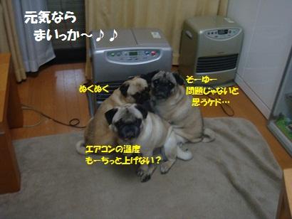 DSC03894_20120323174131.jpg