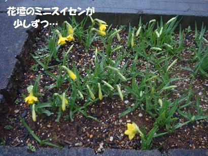 DSC03913_20120323173300.jpg