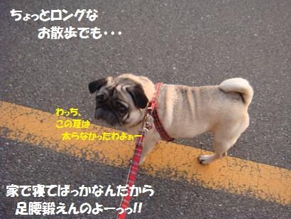 DSC04043_20111105150958.jpg