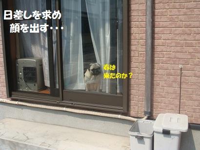 DSC04211_20120404042750.jpg