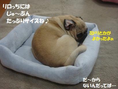 DSC04277_20120331035805.jpg