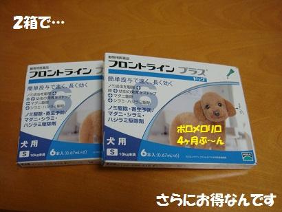 DSC04346_20111108000551.jpg