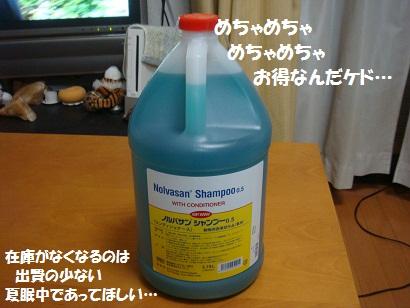 DSC04352_20111108000551.jpg