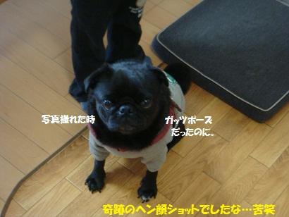 DSC04380_20111115115057.jpg