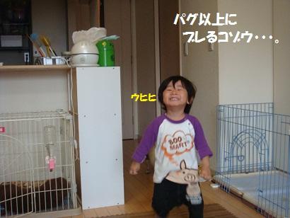 DSC04545_20111115131815.jpg