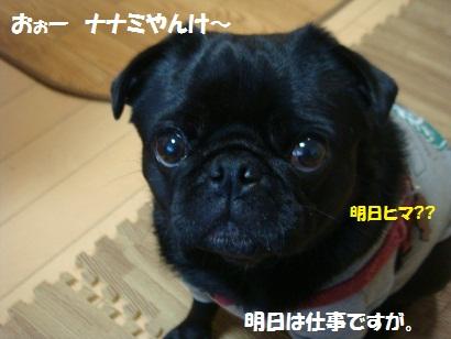 DSC04683_20111110203323.jpg