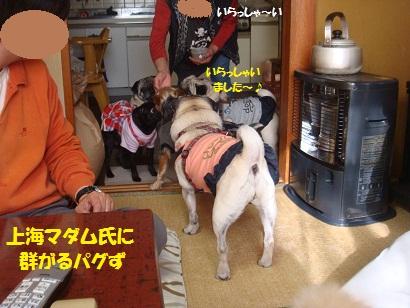 DSC04719.jpg