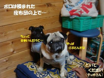 DSC04824_20120423014424.jpg