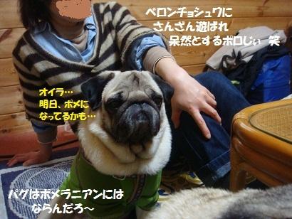 DSC04887.jpg