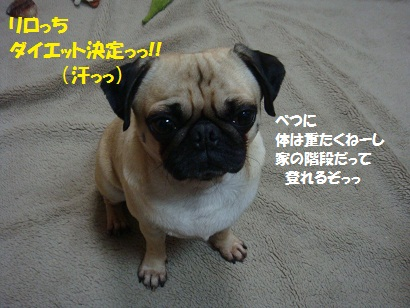 DSC04911_20111116001430.jpg
