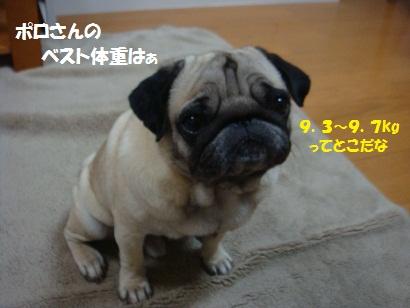 DSC04914_20111115234345.jpg