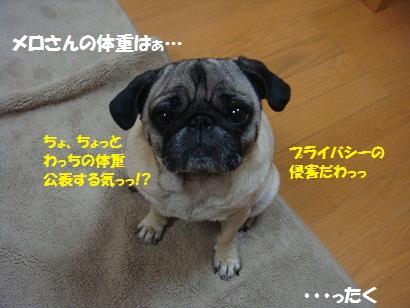 DSC04937_20111116000256.jpg