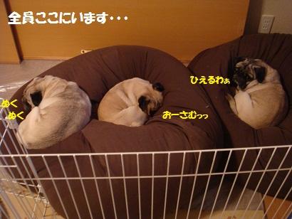 DSC04960_20111122034931.jpg