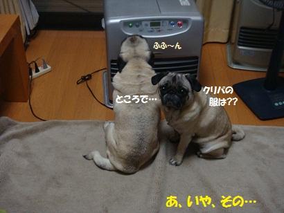 DSC04982_20111231031942.jpg