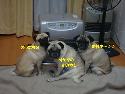 DSC05011_20111222000702.jpg