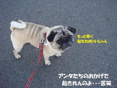 DSC05015_20111122041440.jpg