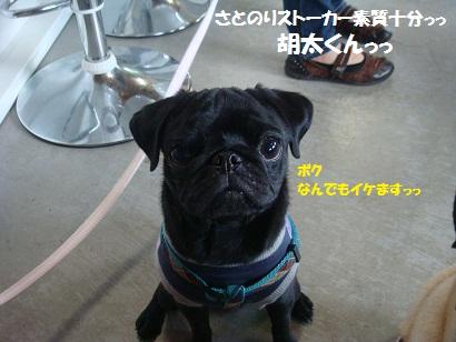 DSC05084_20111104031927.jpg
