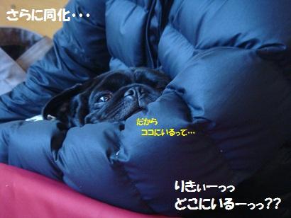 DSC05096_20120425190617.jpg