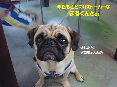 DSC05100_20111104031927.jpg