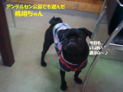 DSC05102_20111104031927.jpg