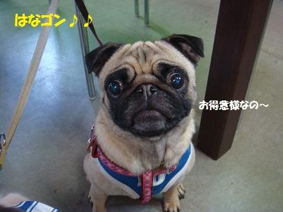 DSC05104_20111104031926.jpg