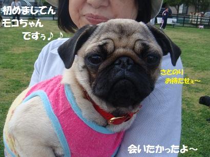 DSC05113_20111104033252.jpg