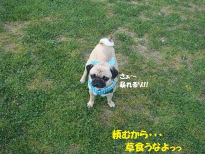 DSC05121_20111105142952.jpg