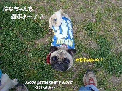 DSC05127_20111105140137.jpg