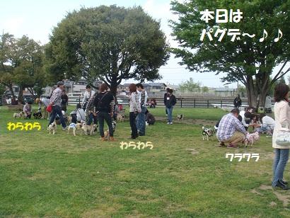 DSC05135_20111104032228.jpg