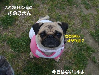 DSC05143_20111104043829.jpg