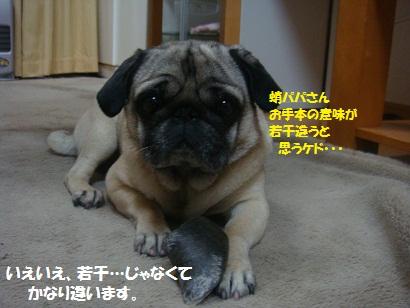 DSC05213_20120410131729.jpg