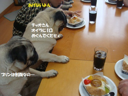 DSC05272_20111108022357.jpg