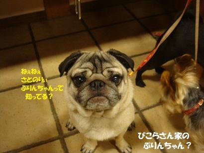 DSC05347_20120427184934.jpg