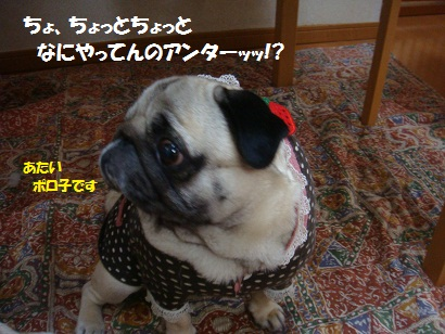 DSC05364.jpg