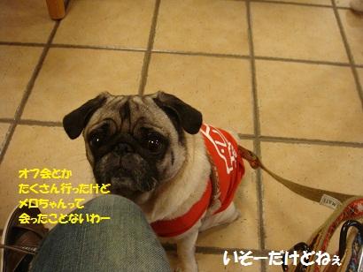 DSC05379_20120427190839.jpg