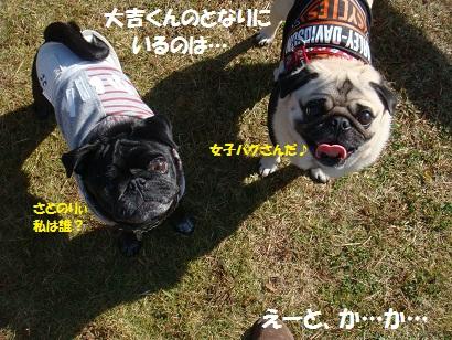 DSC05410_20120503110727.jpg
