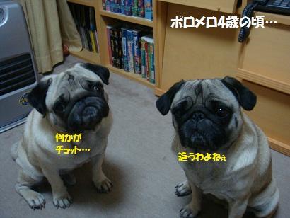 DSC05428_20120508045743.jpg