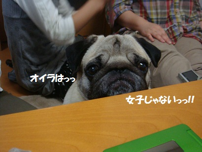 DSC05461_20111112013626.jpg