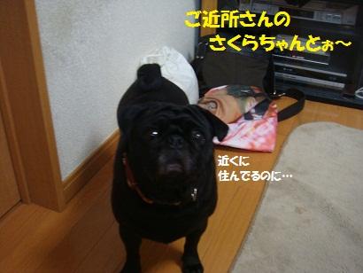 DSC05486_20111109210516.jpg